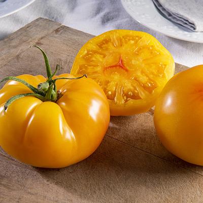 Tomate MARSUNNY (DJ597) HF1